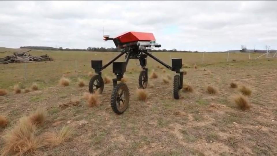 В Австралії робота навчили знаходити бур'яни та поливати їх гербіцидами. ВІДЕО