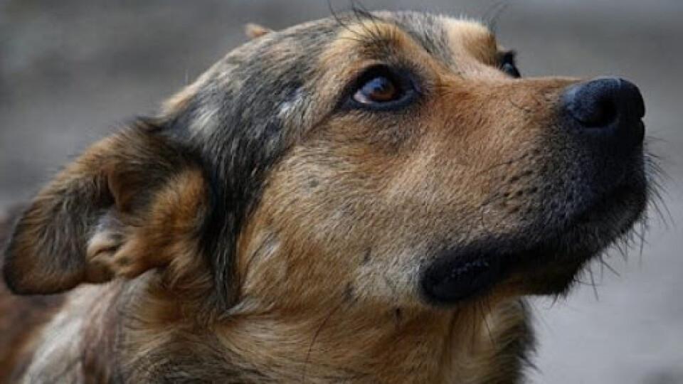 У Луцьку шукають волонтерів, щоб порахувати безпритульних собак