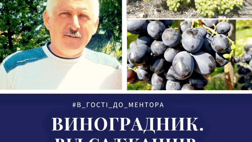 Волинянин вирощує 150 сортів винограду майже 13 років