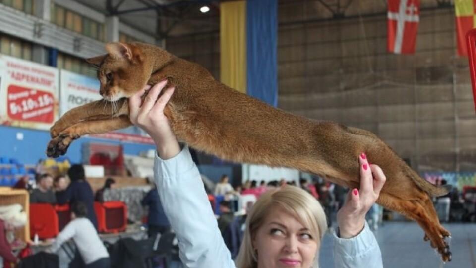 У Луцьку – міжнародна  виставка котів