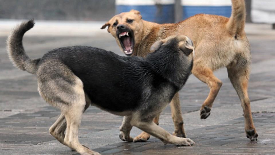 У Рожищі виловили бродячих псів. Забрали навіть самку зі щенятами. ФОТО