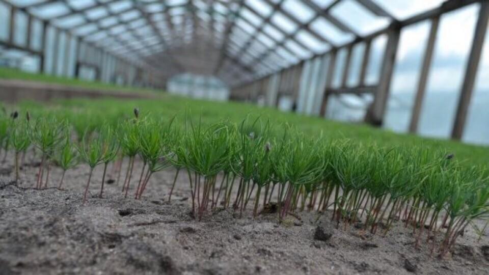 За пів року волинські лісівники посадили 20 мільйонів дерев
