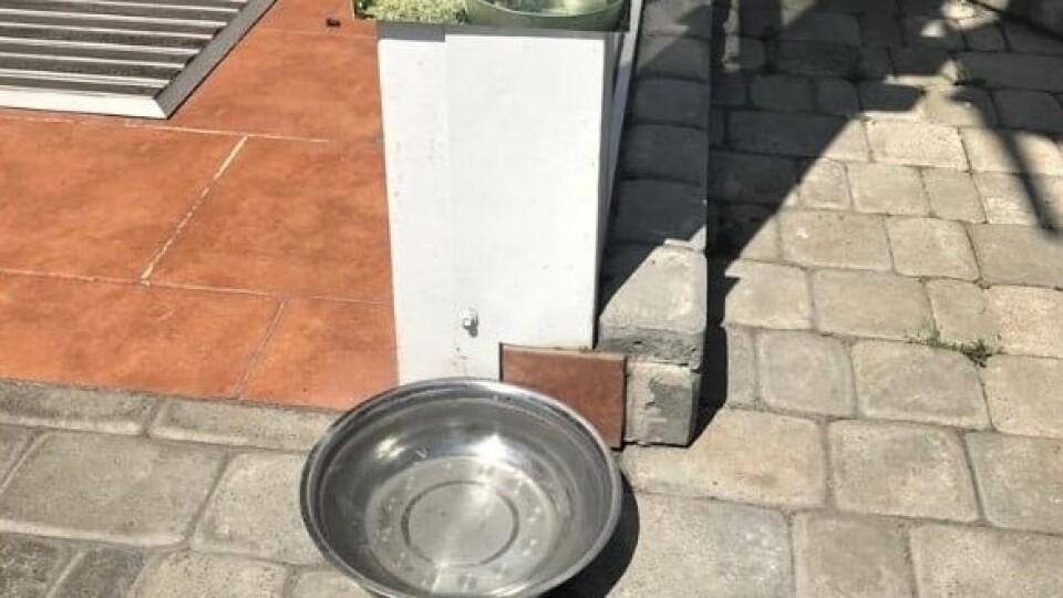 У Луцьку біля ЦНАПу крадуть миски з водою для тварин