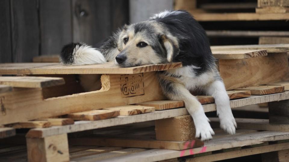 За собаку - тисяча гривень: у Любешеві «полюватимуть» на  безпритульних псів