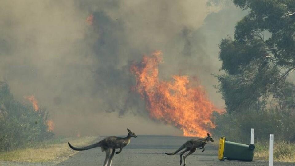 «Пекло на землі». Нищівні пожежі в Австралії спопелили мільйони гектарів