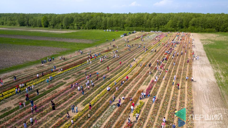 Килим із квітів і сотні людей: фестиваль тюльпанів на Волині з висоти