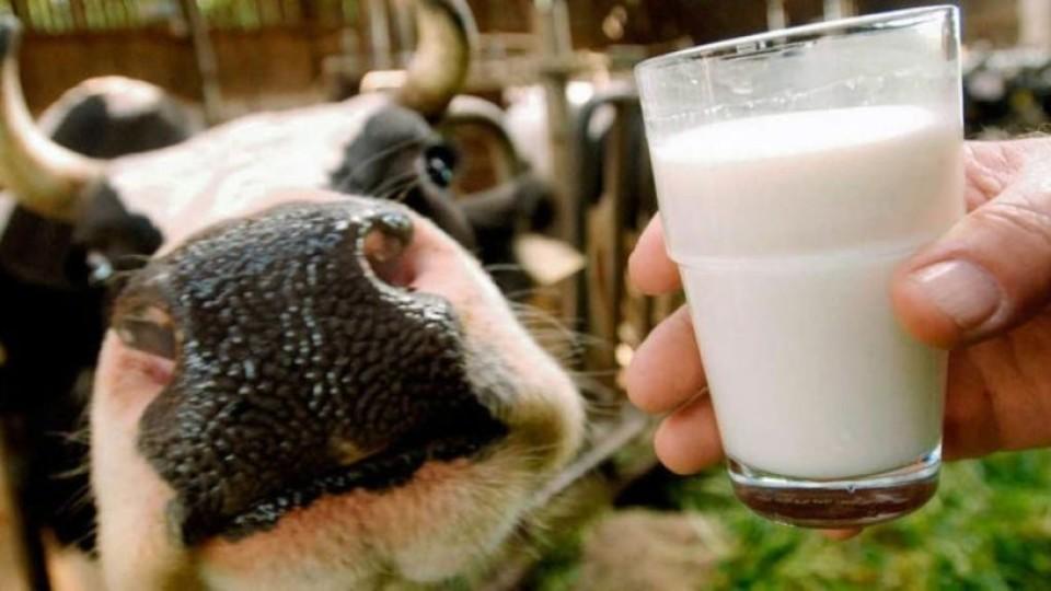 На Волині стали більше продавати молока