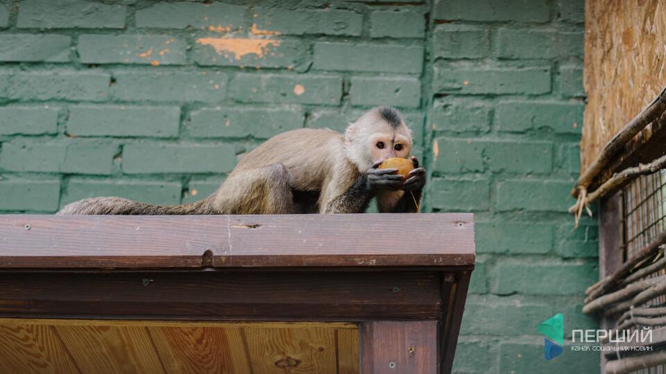 Торти – ведмедям. Луцький зоопарк безплатно збирає їжу з полиць супермаркетів. Як це працює