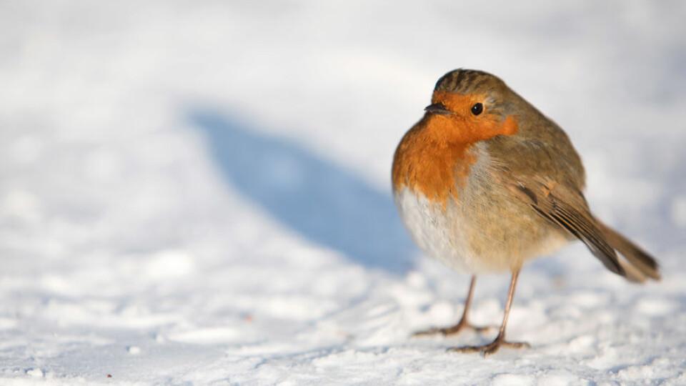 Волинські синоптики попереджають про похолодання