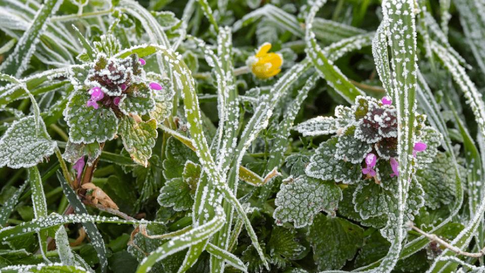 В Україну йдуть заморозки і мокрий сніг