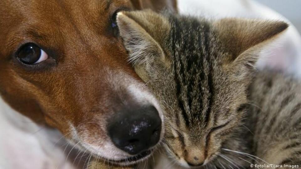На Волині жінка у квартирі тримала 20 собак і котів. Її вмовили переїхати
