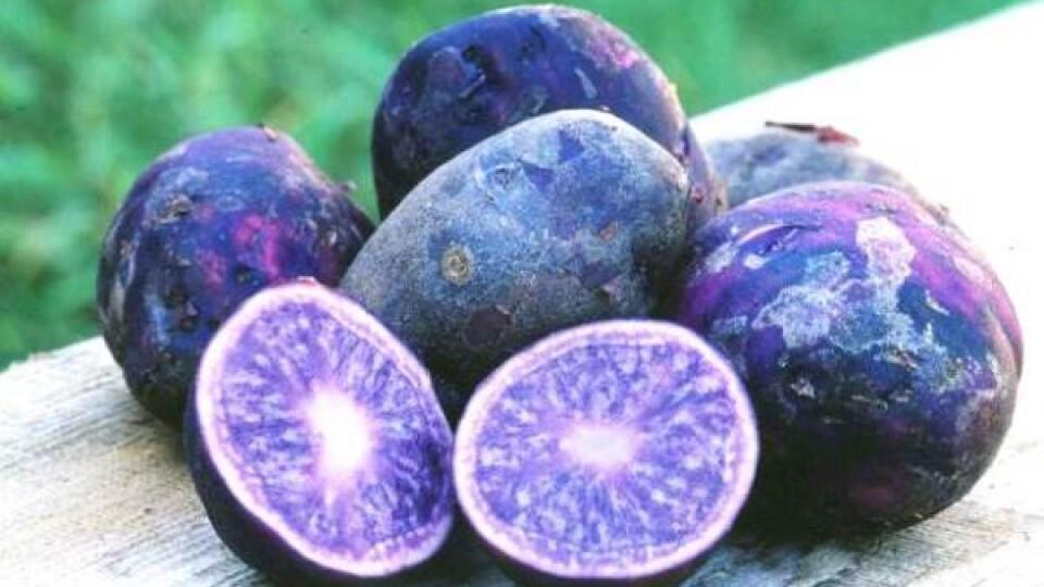 Волинські фермери вирощують екзотичну картоплю, яку продають переважно за кордон