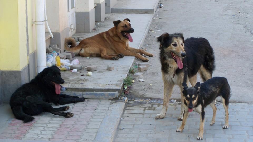 У Луцьку просять збудувати притулок для тварин