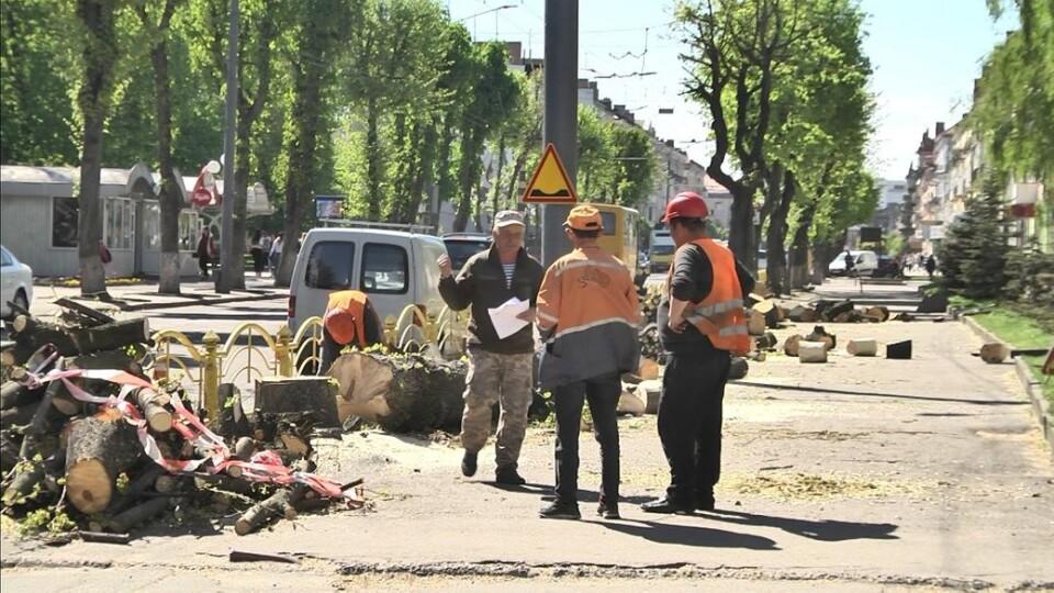 У центрі Луцька зрізають дерева. Пояснення комунальників