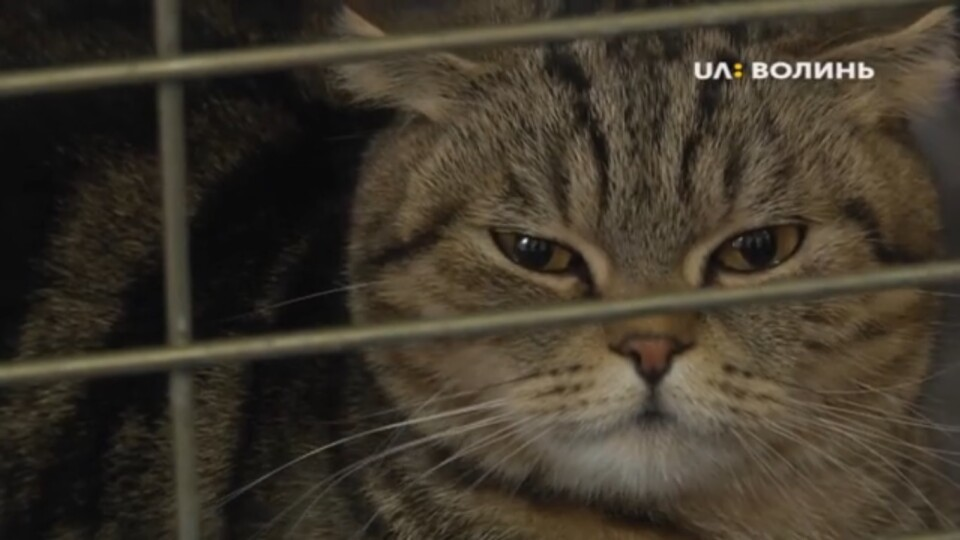 Для дітей та їхніх батьків: виставка котів у Луцьку. ВІДЕО