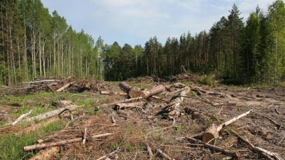 Деревина лежить і гниє, але вивозити - не можна. Лісівники розповіли про проблеми галузі