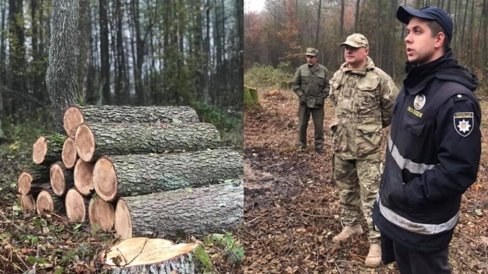 На Волині екологи перевіряють законність рубки дерев