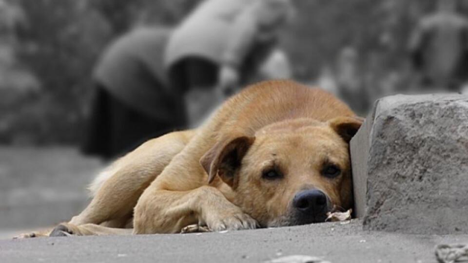 Дана Новарчук виловлюватиме собак у громаді на Волині. Із нею уклали договір