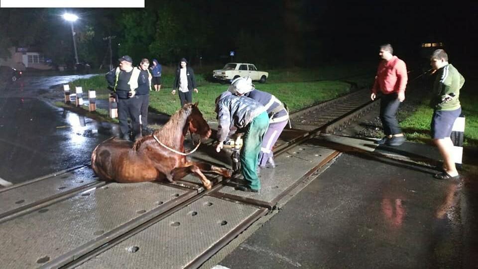 Поблизу Луцька кінь застряг у колії
