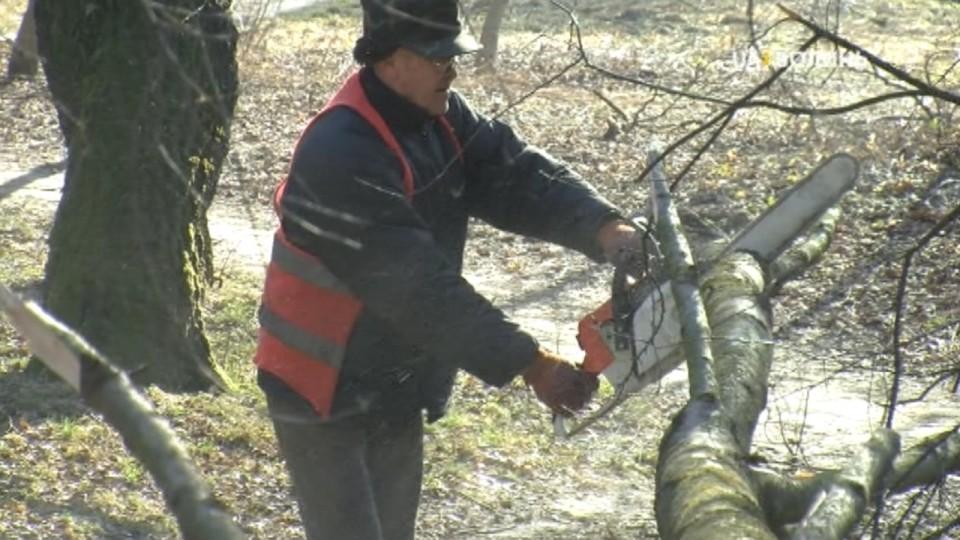 Повалені вітром дерева ріжуть на дрова і віддають бідним лучанам. ВІДЕО