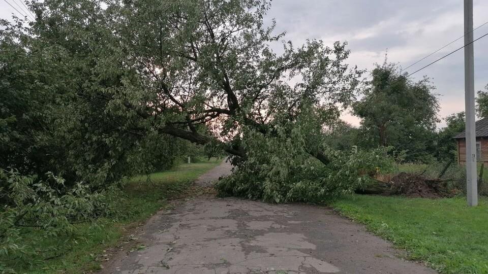 Позривало дахи, повалило дерева. На Волині розгулявся буревій