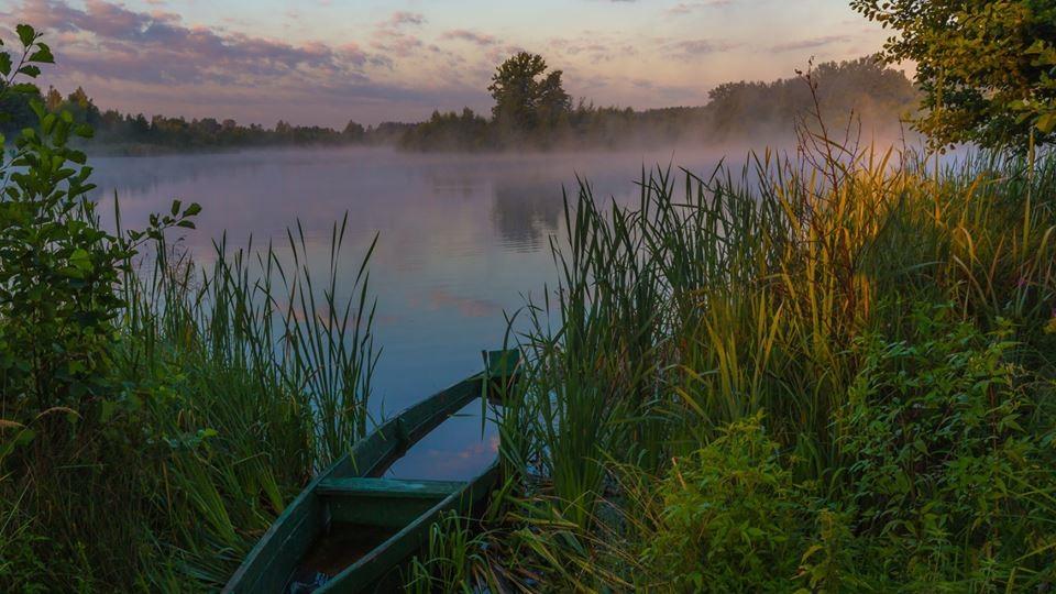 Чарівний світанок над озером Колпине: лебеді і туман в об'єктиві луцького фотографа