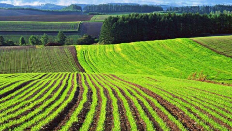 Верховна Рада проголосувала за закон про ринок землі. Що він означає?