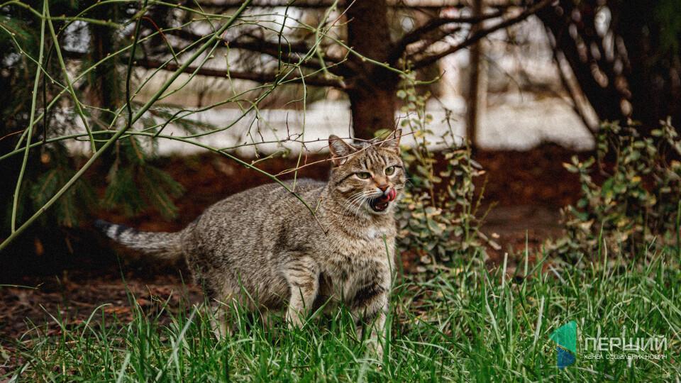 Цитра. Вільна кішка для вільних людей із луцького джаз-клубу. КІТ НА ОФІСІ