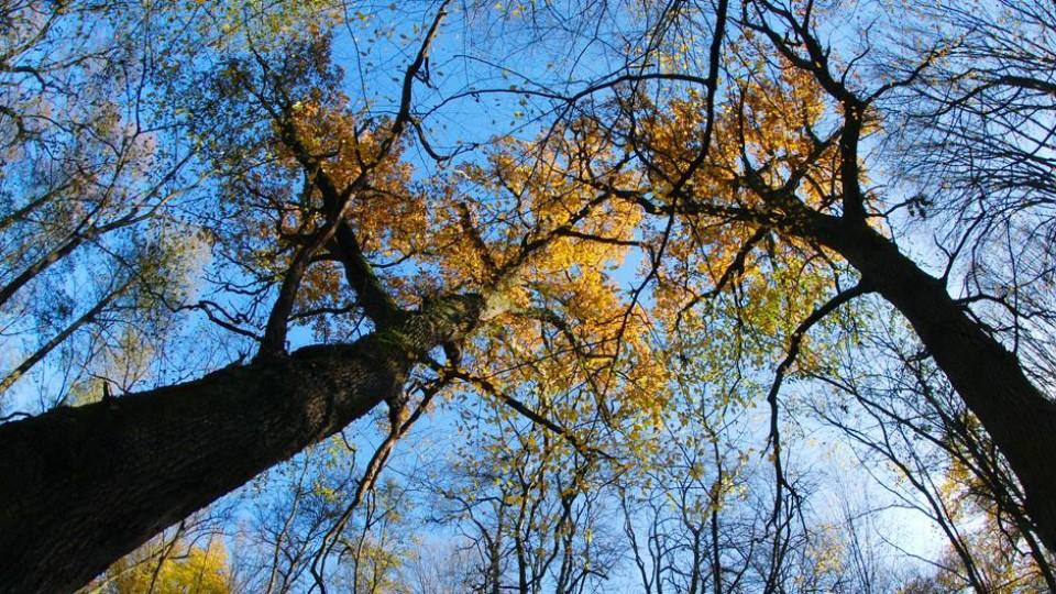 Останній день жовтня у волинському лісі. ФОТО