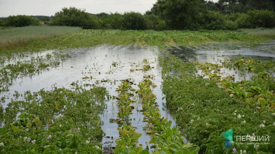 Ратнівщину топить. Людські городи, пасовища – під водою, в ОДА кажуть, «це не надзвичайна ситуація»