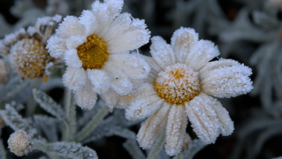 Синоптики попереджають про заморозки на Волині