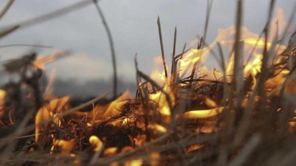 Рада хоче збільшити штрафи за паління рослин, торфовищ та іншу шкоду довкіллю