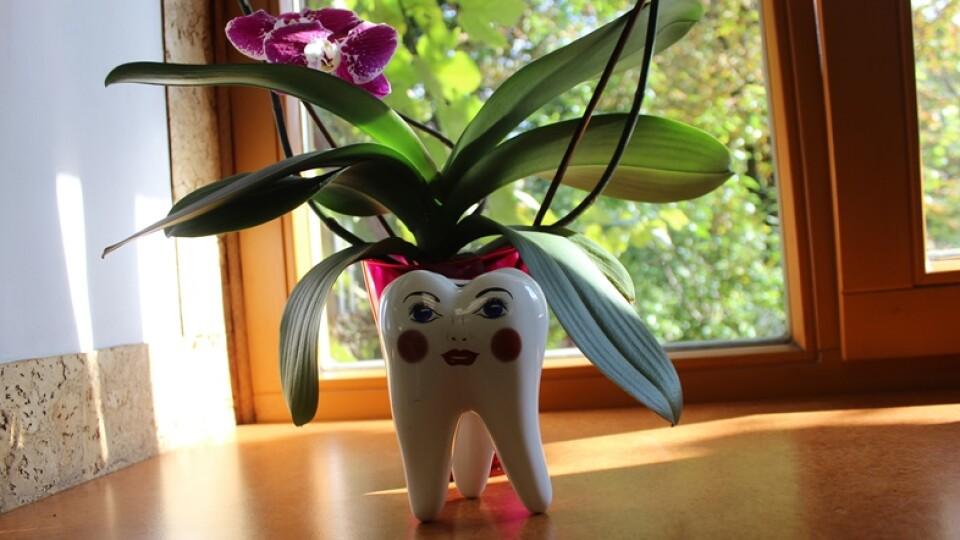 «Ми – за здорові посмішки!» – луцький стоматологічний центр «Здоров'я Плюс»