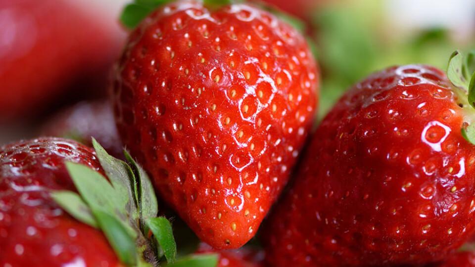 20 сортів на 4-х гектарах. У селі на Волині полуницю збирають із травня до листопада