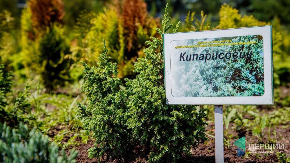 180 видів декоративних рослин вирощують у Гаразджі. Як їх купити?