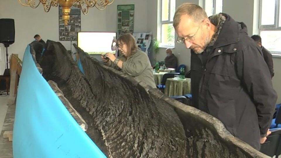 Знайдений на Волині човен-довбанка, якому понад 700 років, став доступний для відвідувачів