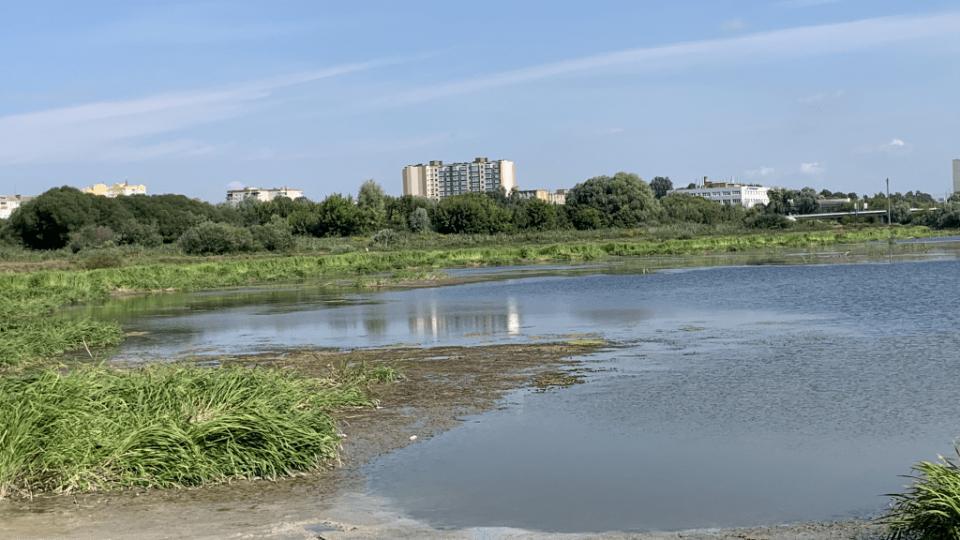 Лучанин просить очистити заплаву річки Стир. Зареєстрував петицію