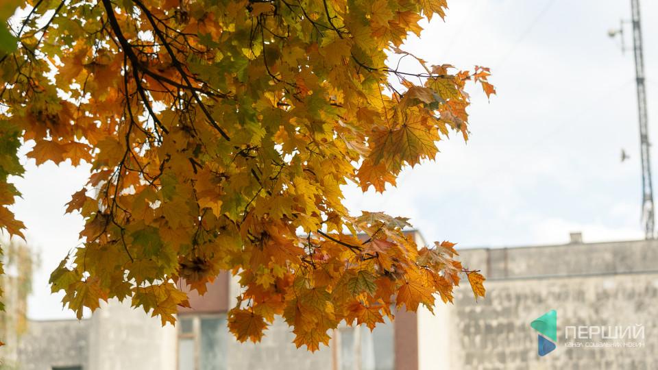 Золота осінь на порозі: жовтогарячий Луцьк. ФОТО