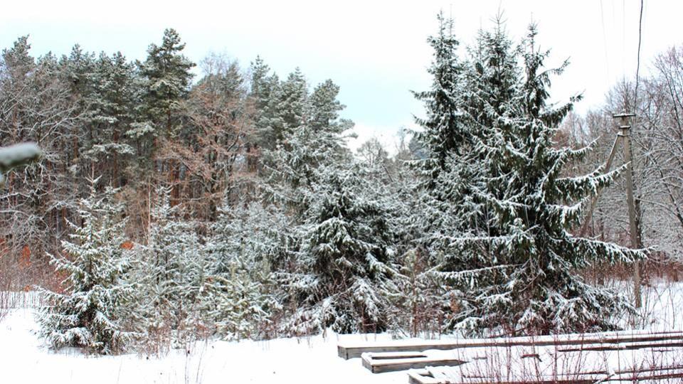 Зимова казка у волинському лісі. ФОТО