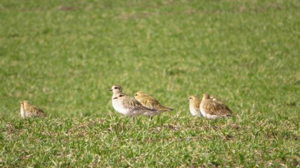 На Волині сфотографували рідкісних птахів. ФОТО