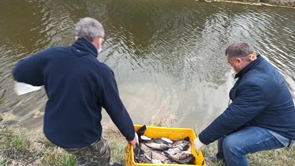 У водойми Центрального парку Луцька випустили 300 кілорамів риби