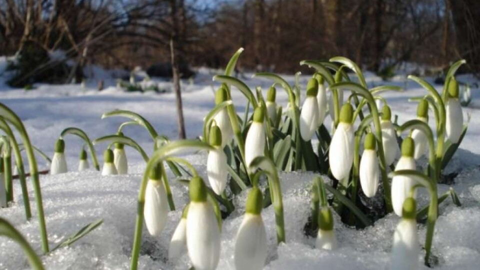 На Волинь іде похолодання з мокрим снігом