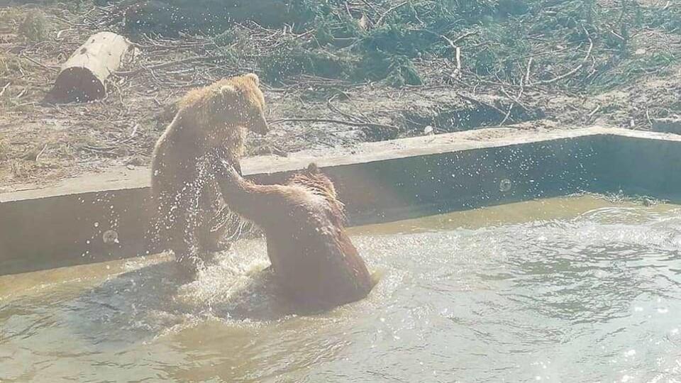 У Луцькому зоопарку зі сплячки прокинулися усі ведмеді