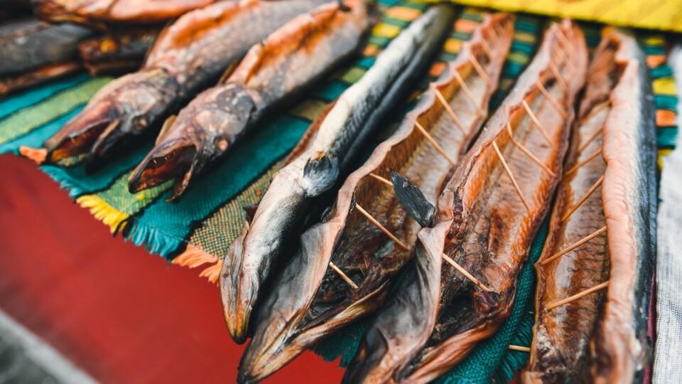 500 гривень за рибину. Як на Світязі заробляють на вуграх