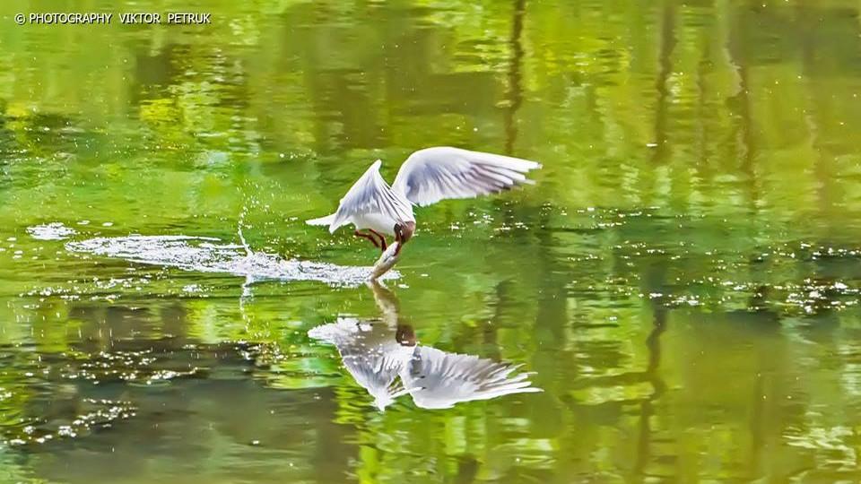 Фотограф з Луцька опублікував «живі» світлини до Дня рибалки. ФОТО