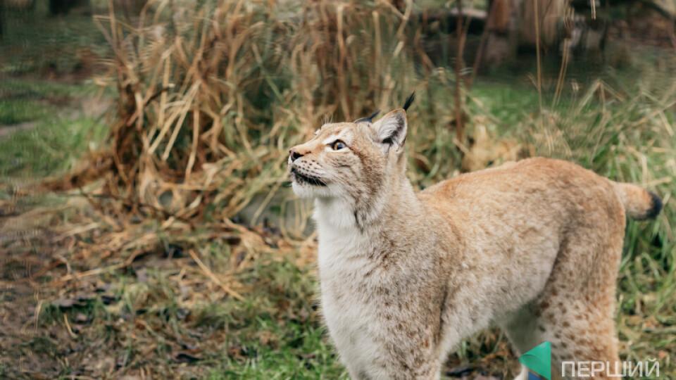 1 червня у Луцькому зоопарку влаштовують акцію –50% знижки на дитячі квитки