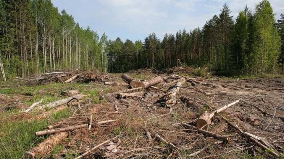 Шмигаль заявив, що в Україні садять більше лісів, ніж вирубують