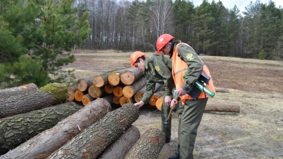 На безпеку волинські лісівники  торік  витратили майже 16 мільйонів гривень. ФОТО