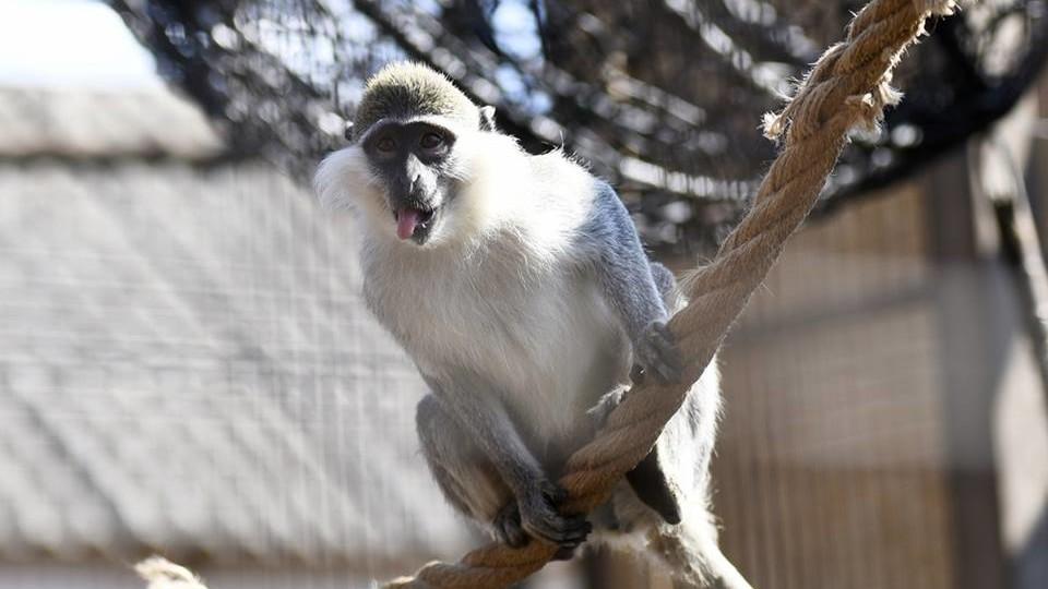 Без виборів: весна в Луцькому зоопарку. ФОТО