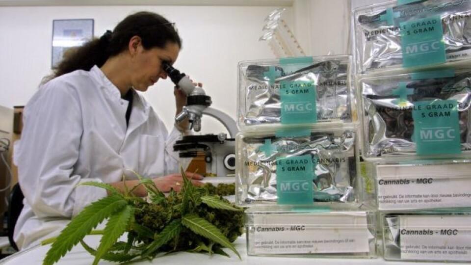 Верховна Рада схвалила легалізацію медичного канабісу